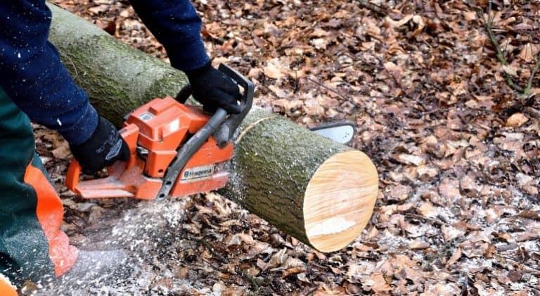 Kettensäge schneidet Baumstamm