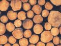 Holzspalter: Test & Empfehlungen (08/20)