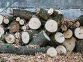 Brennholzsäge: Test und Empfehlungen 09/20