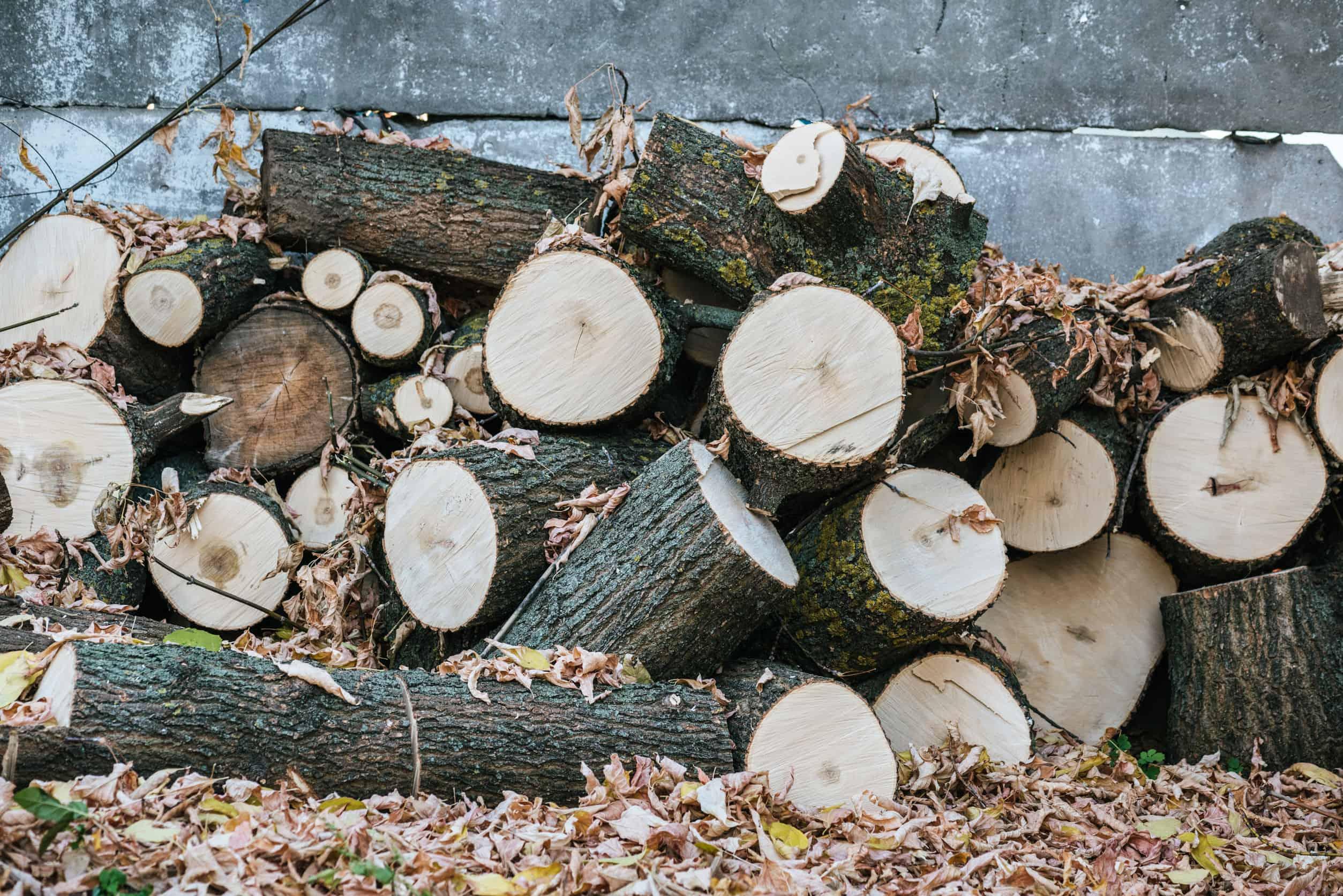 Brennholzsäge: Test und Empfehlungen 04/20